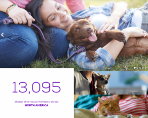 petfinder-pet adoptions