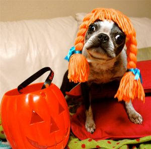 Don't let your dogs be spooked this Halloween