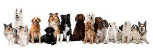 Dog Training - The Well Trained Dog