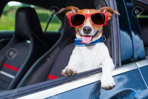 Why do dogs love to hang their head out the car window?