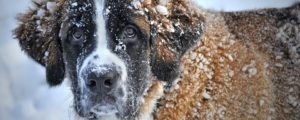 Ways to Keep Your Senior Dog Healthy During the Winter
